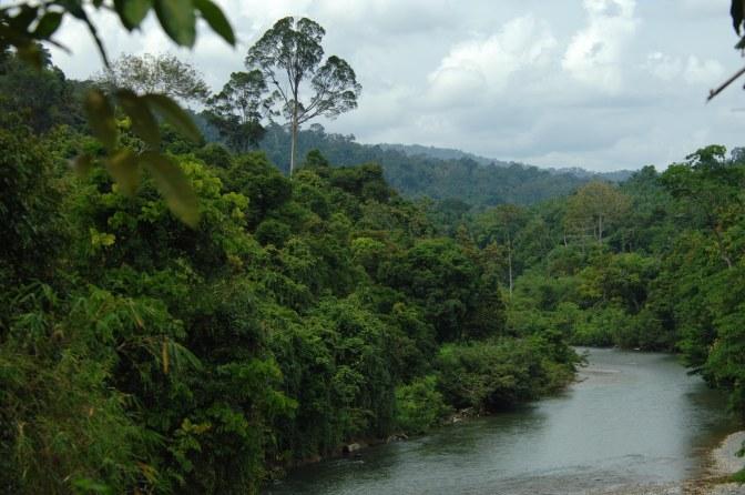 08 Ketambe River, Gunung Leuser Park, Aceh Sumatra